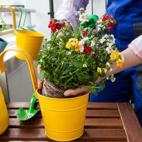 Jakie rośliny na balkon kwitną najpiękniej?