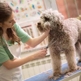 Czy warto zaprowadzać psa do salonu piękności dla czworonogów?
