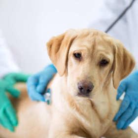 Jak chronić zwierzaka przed chorobami? Szczepienia i odrobaczanie
