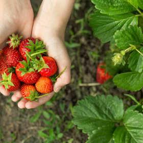 Aromaty – poznaj prawdę o najpopularniejszych dodatkach do żywności
