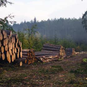 Dlaczego lepiej kupić drewno w tartaku niż w markecie budowlanym? Poradnik