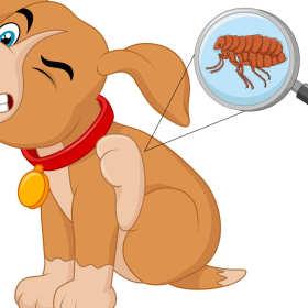 Pozbądź się pcheł u psa. Jak to zrobić?