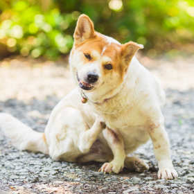 Czy pies może mieć alergię? Jak rozpoznać objawy? Poradnik