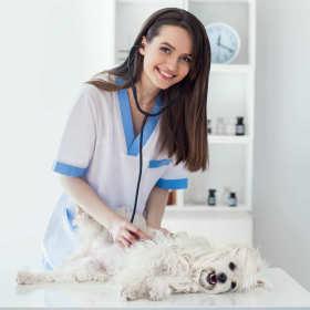 Jak znaleźć weterynarza, który kocha zwierzęta?