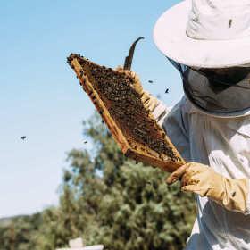 Jak zacząć przygodę z pszczelarstwem?