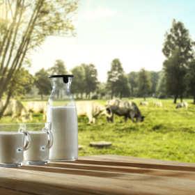 Specjalistyczny sprzęt udojowy – nowoczesne przetwórstwo mleka
