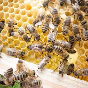 Skąd czerpać wiedzę o pszczelarstwie?