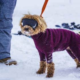 Stylowy pies, czyli ubranka dla pupila