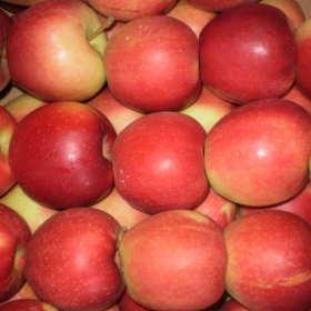 Najlepsze hurtownie świeżych warzyw i owoców
