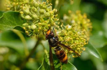 Pierwsza pomoc w przypadku użądlenia przez owady