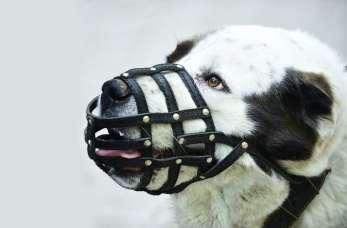 Kagańce dla psów. Co mówi o nich prawo?