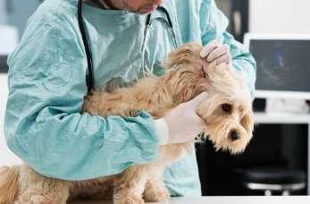 Najczęstsze choroby psów