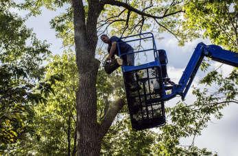 Prace wysokościowe – pielęgnacja i wycinka drzew