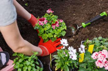 Maj w ogrodzie – niezbędnik ogrodnika