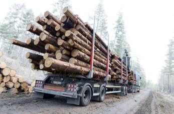 Zalety drewna skandynawskiego