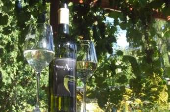 Winnice na terenie Polski