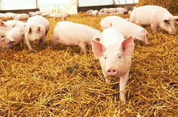 Fachowy sprzęt weterynaryjny i artykuły do chowu i hodowli zwierząt