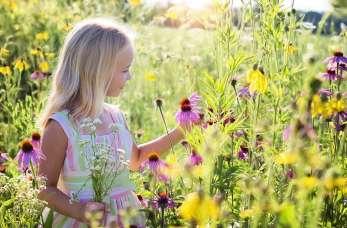 Jakie nasiona kwiatów ogrodowych warto wybrać?