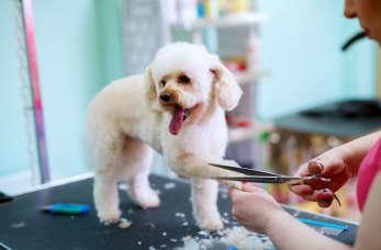 Sposoby na strzyżenie psa u fryzjera