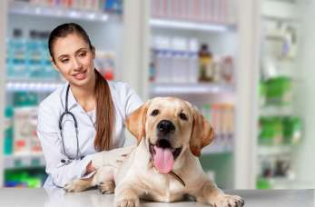 Kiedy warto udać się do centrum zdrowia zwierząt?