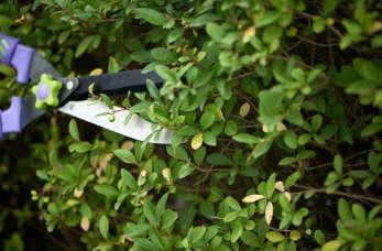 Specjalistyczne usługi wycinki i przesadzania drzew