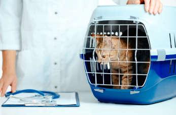 Profilaktyka zdrowia zwierząt