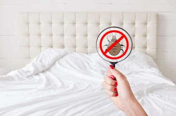 Jak zwalczyć pluskwy domowe? Poznaj nasze wskazówki!