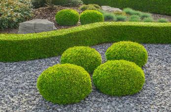 Zakładanie ogrodu według własnego projektu – jakie czynności powinniśmy wziąć pod uwagę?