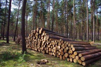 Pozyskiwanie drewna i wycinka drzew