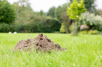 Co zamieszkało w naszym ogrodzie? Kret czy nornica?