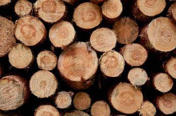 Drewno - jakie drewno używać do palenia?