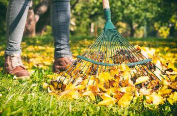 Jesienne porządki w ogrodzie – o czym powinieneś pamiętać?