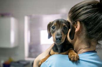 Kiedy trzeba iść z psem do weterynarza?