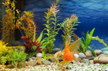 Piękne, zadbane akwarium. Jak pielęgnować swój kawałek podwodnego świata?