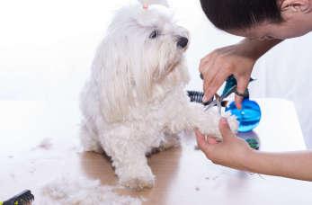 Kochasz zwierzęta? Kurs groomingu to coś dla Ciebie!