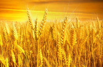 Czy warto zostać rolnikiem?