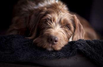 Twój pies ma padaczkę? Sprawdź, jak mu pomóc