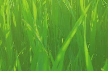 Wybór odpowiedniej mieszanki traw