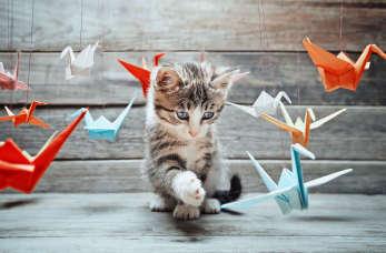 9 zaskakujących faktów na temat kotów