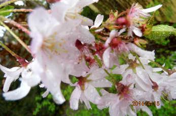 Jak stworzyć piękny ogród, czyli rola roślin ozdobnych
