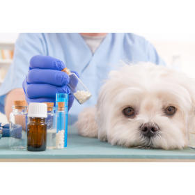 Badania specjalistyczne dla zwierząt Losvet