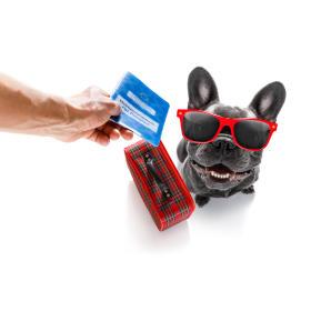 Wyrabianie paszportów dla zwierząt Losvet