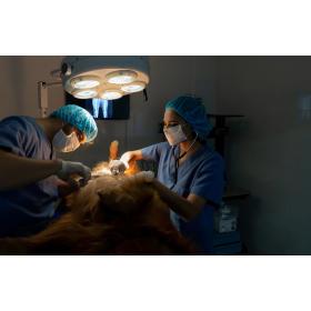 Chirurgia zwierząt Pies czyli Kot Przychodnia weterynaryjna