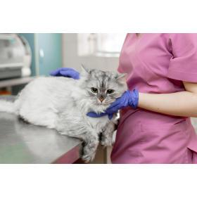 Ultrasonografia zwierząt Lecznica Weterynaryjna DoktorWet