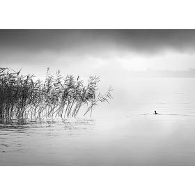 Dekoria.pl Obraz na płótnie By the Lake II, 50 x 35 cm